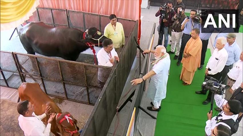 प्रधानमंत्री मथुरा में 'राष्ट्रीय पशु रोग निवारण कार्यक्रम' के दौरान निरीक्षण करते हुए